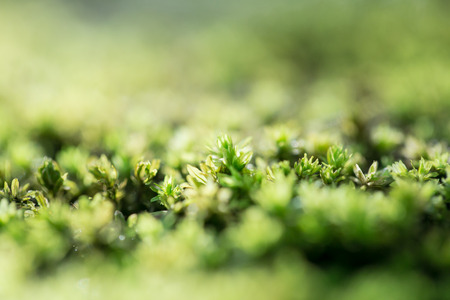 green moss In the Forest background