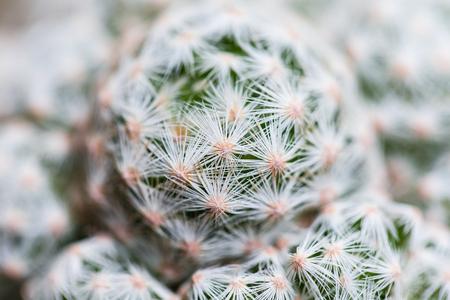 Various fresh green cactus plants background Stockfoto