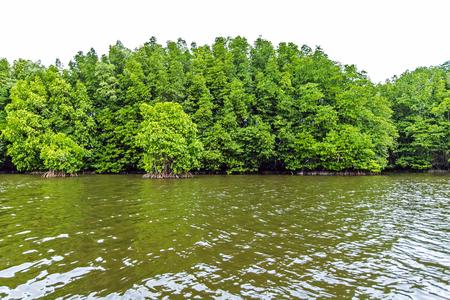 Mangrove trees along the sea Stock fotó