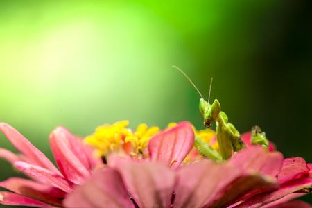 green flower praying mantis on leaf Archivio Fotografico