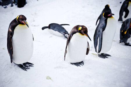 Show the penguin Bird Parade Banque d'images