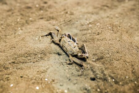 Food Chain on Dutch beach at Don Hoi Lot,Samut Songkhram Province,Thailand Stockfoto