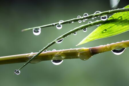 The water droplets on the leaves during the rainy season of the rainforest are the source of the ecosystem.