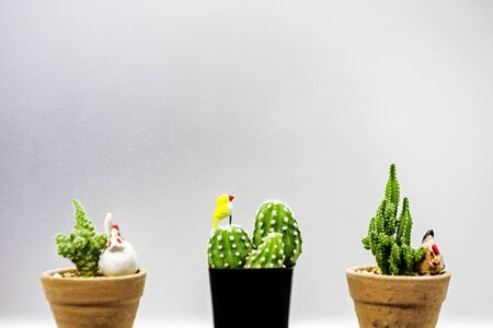 Cactus is a plant that lives in arid land such as desert, can tolerate drought well, there are many species