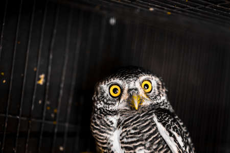 Owls are predators that look for food at night.
