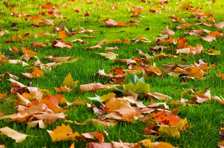 Autumn leaves on the lawn of green grass. photo