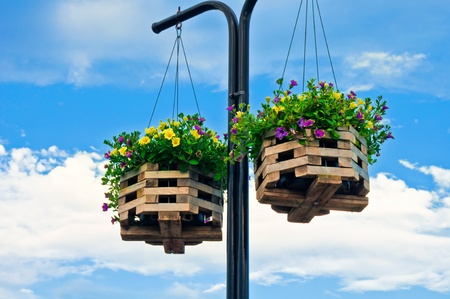 Petunia in hanging baskets as decoration for city streets in summer.