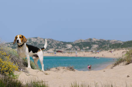 dog and beach photo