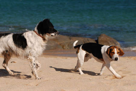 dogs playing: speech between dogs Stock Photo
