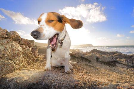 dog summer: smiling dog