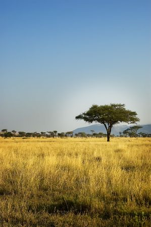 African Savannah Landscape Stock Photo - 3849066