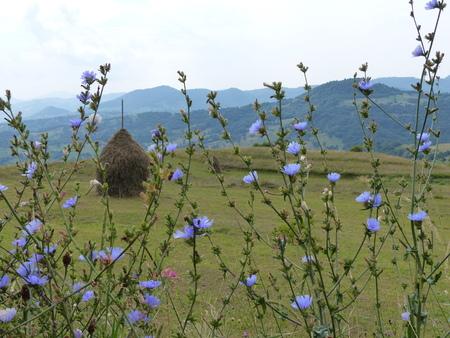 Bucolic landscape of Maramures in Romania