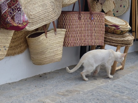 A walking white cat in front of a shop of wicker hanging baskets. Stock fotó