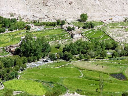 Green fields in the remote Ladakh in India.