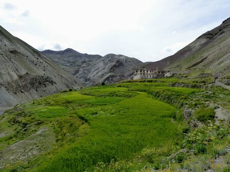 Green oasis in the remote mountains of Ladakh in India.