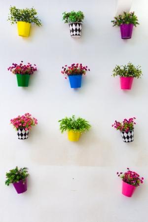 geranium color: flower pots