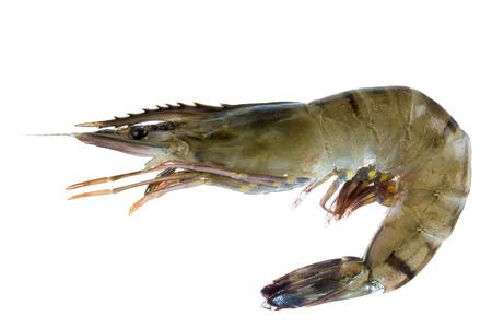 Isolated shrimp