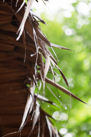 Dried Leaves Roof photo