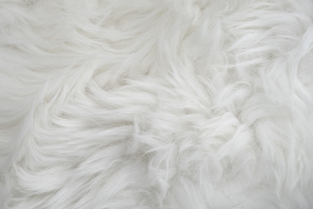 Sheep fur Stock Photo