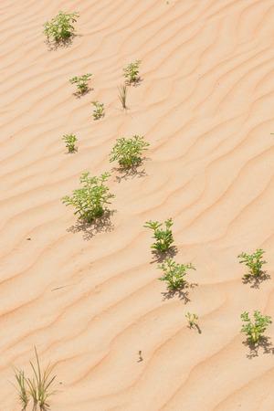 Desert vegetation photo