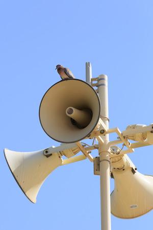 Megaphone and bird photo