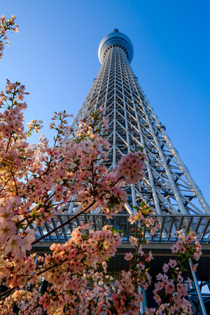 TOKYO - APRIL 15: Tokyo Sky Tree. The 2nd tallest building of the world and tallest of Japan (634m).  On April 15th in Sumida, Tokyo, Japan.