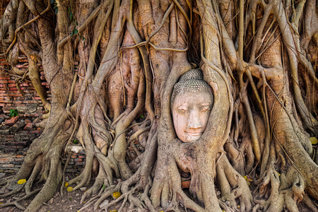 smiling buddha: Ancient buddha head embeded in banyan tree from Ayutthaya, Thailand Stock Photo
