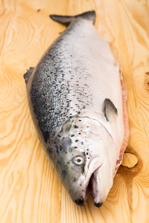 salmon migration: Close up on a whole raw Norwegian salmon