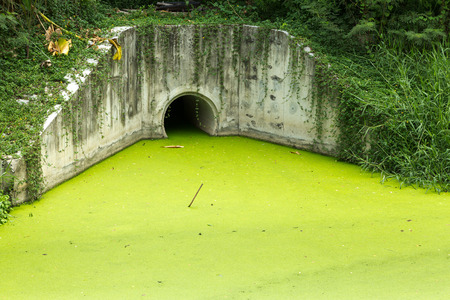 Dirty green toxic water contaminated with algae