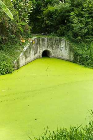 remediation: Dirty green toxic water contaminated with algae