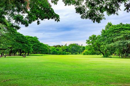 夏の日の公園の背景