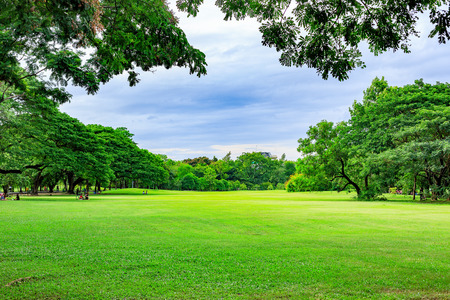 scenic: Public park background on a summer day