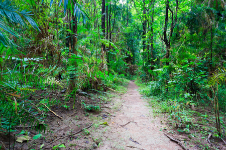 hiking path: Tropical forest hiking path from Thailand national park