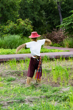scare: Scare crow guardning rice field from birds Stock Photo