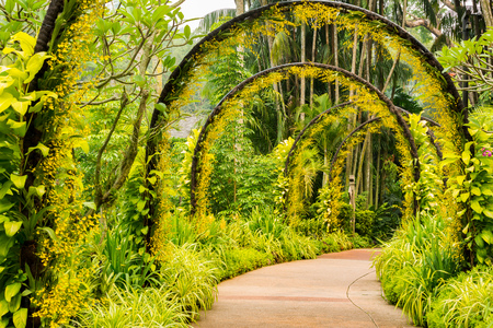 footpath: Arch way of yellow orchid from Singapore National Orchid Garden