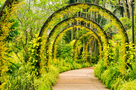 botanic garden: Arch way of yellow orchid from Singapore National Orchid Garden