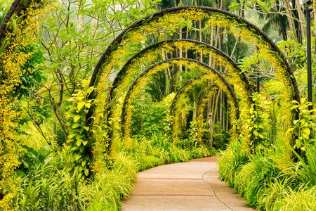 orchids: modo Arco di orchidea gialla dal Singapore National Orchid Garden