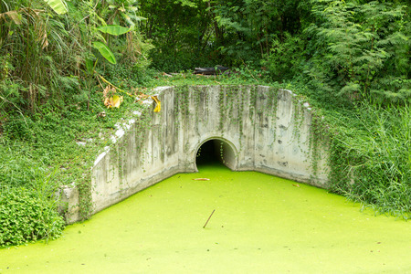 contaminated: Dirty green toxic water contaminated with algae