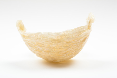 Fresh edible birds nest on white paper