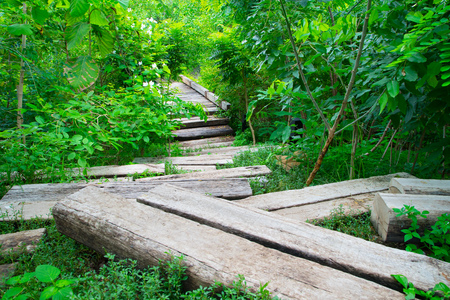 walk path: Lush green forest walk path in summer season