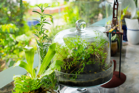 Small terrarium plants enclosed in glass capsule