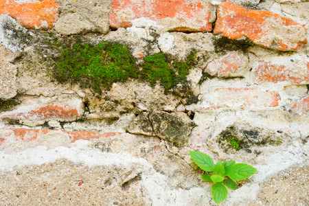 splitter: Green plant growing off of a crack in a wall Stock Photo
