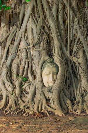 Buddha head looking off to the side embed in tree Stock Photo