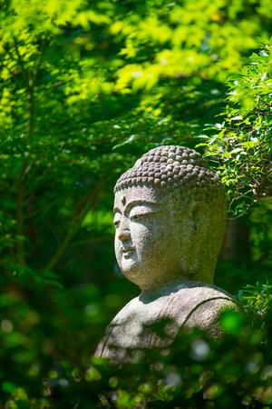 shinto: Buddha statue in maple tree from Ryoan ji temple, Kyoto