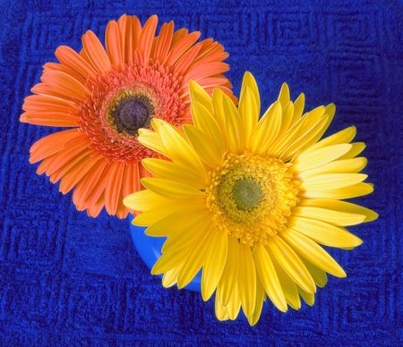 Yellow and orange flowers in a blue jug on a dark blue background photo