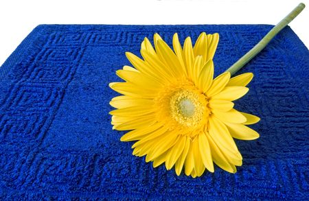 Yellow flower on a dark blue terry towel and a white background photo