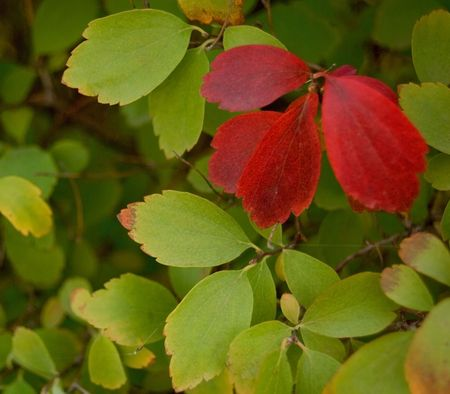 Three red sheets against green leaves photo