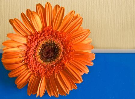 白いストリップで割った黄色暗い青色の背景にオレンジ色の花します。 写真素材 - 5864221