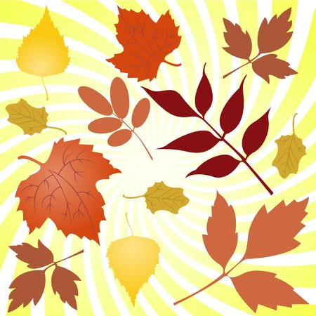 Several autumn yellowing of leaves from different trees Stock Vector - 7734401