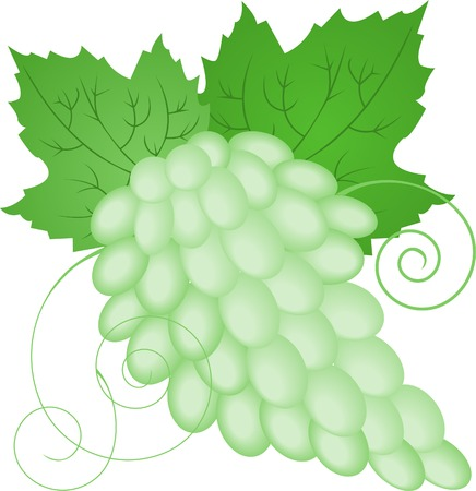 bunch of green grapes with leaves on white background Stock Vector - 8925312
